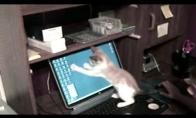 Virtuali pelytė