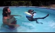 Šuo poilsiauja baseine