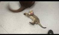 Kačiuko naujas žaisliukas