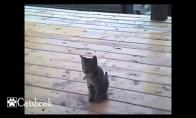 Rūkantis kačiukas