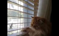 Katinui trukdo langas