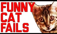 Juokingų katiniukų rinkinys