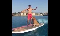 Šuo irgi moka gaudyt bangas