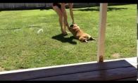 Šuo nenori maudytis