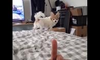 """Šuneliui nepatinka, kai jis """"fakinamas"""""""