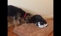 Katinas vs šuo