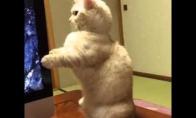 Kačiuką nustebino kompas