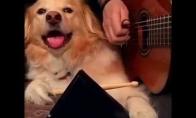 Šuo-muzikantas