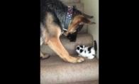 Draugiškas šuo