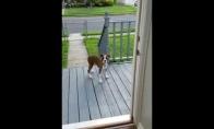 Šuo trollina šeiminkę