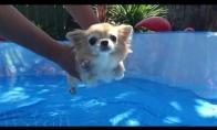 Šuniukas mokosi plaukti
