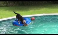 Protingas šuo nenori sušlapti