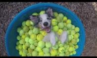 Laimingiausias šunelis pasaulyje