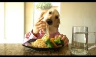 Virtuvės šefo šuns gyvenimas