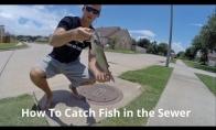 Ar įmanoma pagauti žuvį kanalizacijoje?