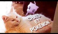 Katiniukai prieš Pokemonus