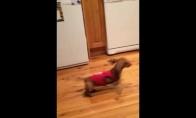 Šuo-bumerangas