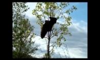 Meškiukas ieško medaus