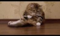 Katinas masažuoja save