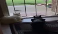 Kačių gąsdintojas