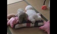 Šuniukas kaip žaisliukas
