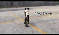 Šuo-riedlininkas