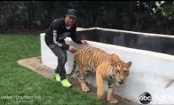 Hamiltonas išgąsdina tigrą