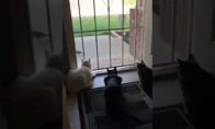 Kačių košmaras