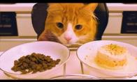 Naminis kačių maistas prieš pirktinį
