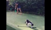 Katinams irgi patinka golfas