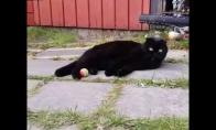 Juodas kačiukas ir kamuoliukas