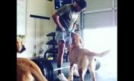 Šuo padeda sportuot