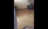 Kada palieki katiną vieną