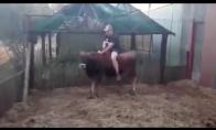 Vyrukas bandė pažabot bulių