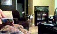 Šuo bijo Džulijos Roberts