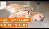 Šunelis nenori palikti gyvūnų parduotuvės