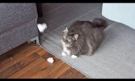 Katė ir sniegas
