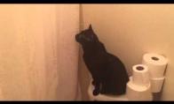 Susirūpinusi katė