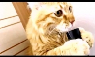 Katė su dulkiu siurbliu