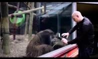 Orangutango reakcija į magišką triuką