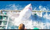 Ryklys patenka į narvą su turistu
