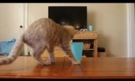 Kodėl kačiukai nesinaudoja puodeliais