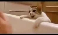 Katinas bando išgelbėti šeimininką iš vonios