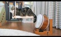 Katinas Maru ir būgnas