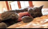 Kodėl mes mylime kates