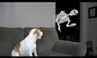 Šunelis prieš skeletą