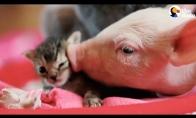 Paršiukas ir kačiukas - geriausi draugai