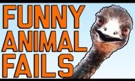 Gyvūnų - nevykėlių FAIL rinkinys