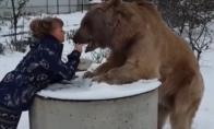 Kai išvedi savo šunį į lauką
