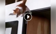 Skraidanti katė